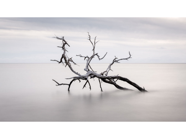 A kiawe tree sits in a quiet bay along West Maui